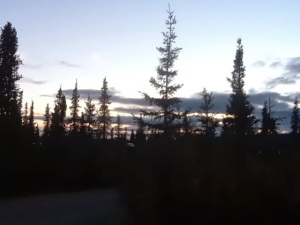 trees alaska